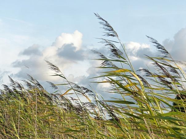 wind (1)
